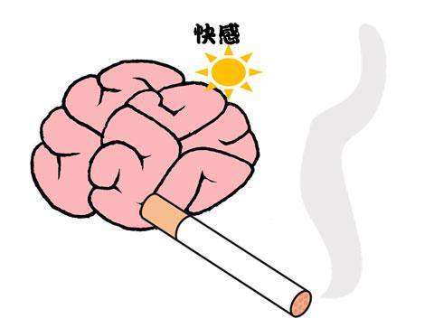 喫煙により快感を得ている脳