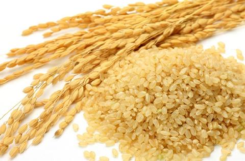 シリカが比較的多く含まれている玄米