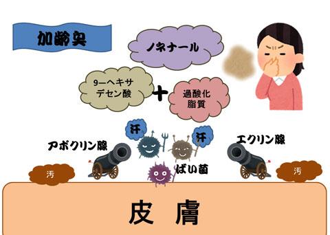 加齢臭の原因のノネナールが出てくる仕組み