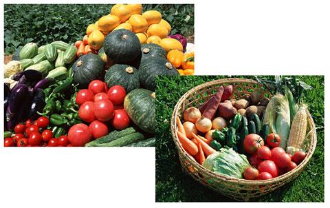 繊維の多い野菜
