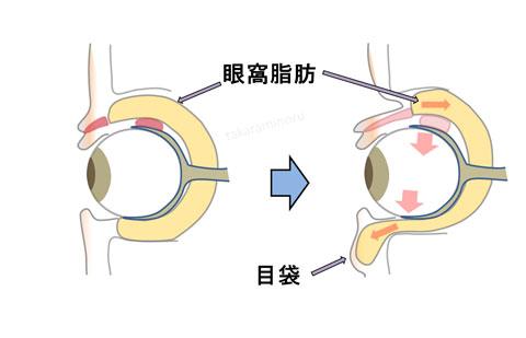 目の周りの構造