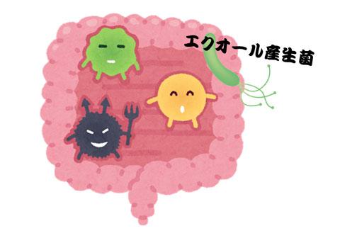 エクオールを含む腸内細菌