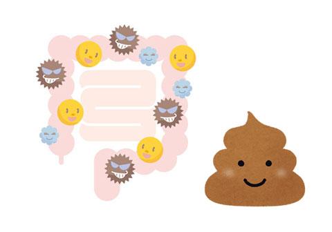 悪玉菌が多い腸内環境
