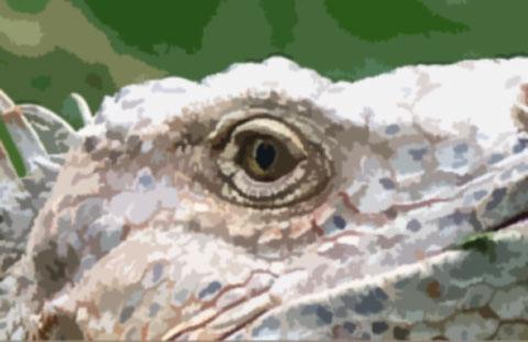 進化途中の動物の目