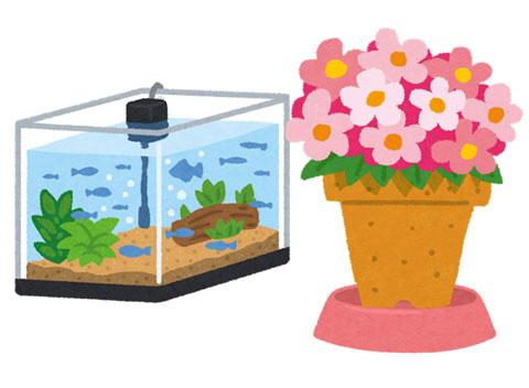 水草と鉢植え