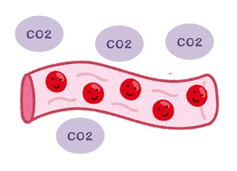 二酸化炭素の増加に対応して増えている血流